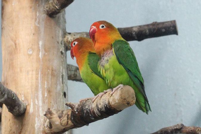 上野動物園:バードハウス~愛しのボウシゲラ_b0355317_18413438.jpg