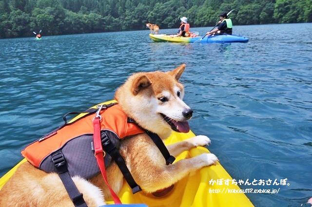 親子も犬連れも楽しめる!夏休みのお出かけスポット&家族旅行ならここ!_d0350330_17091287.jpg