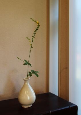 花だより 金水引_a0279848_17514629.jpg