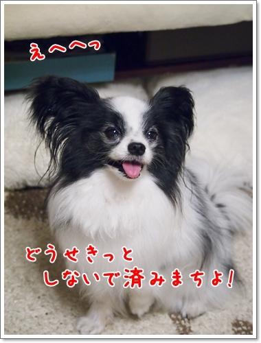 d0013149_00350361.jpg