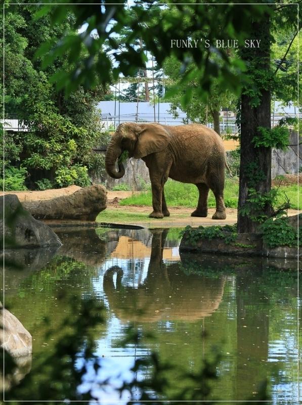 動物園に行こう♪ (暑中お見舞い申し上げます。)_c0145250_12112212.jpg