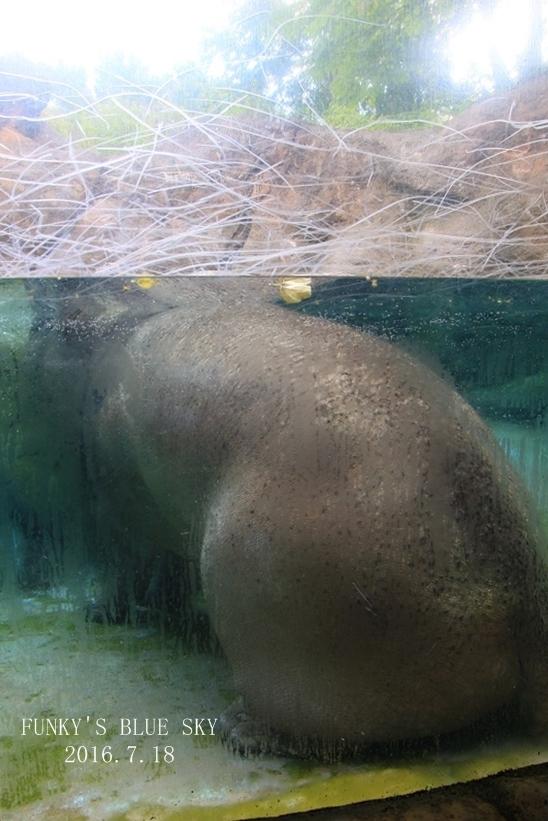 動物園に行こう♪ (暑中お見舞い申し上げます。)_c0145250_12112633.jpg