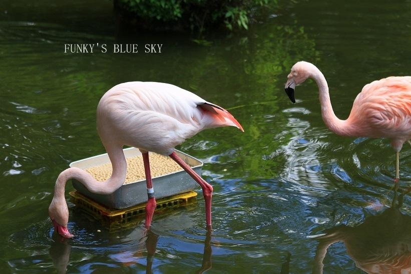 動物園に行こう♪ (暑中お見舞い申し上げます。)_c0145250_12113704.jpg