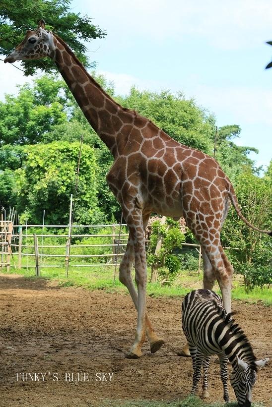 動物園に行こう♪ (暑中お見舞い申し上げます。)_c0145250_12114567.jpg
