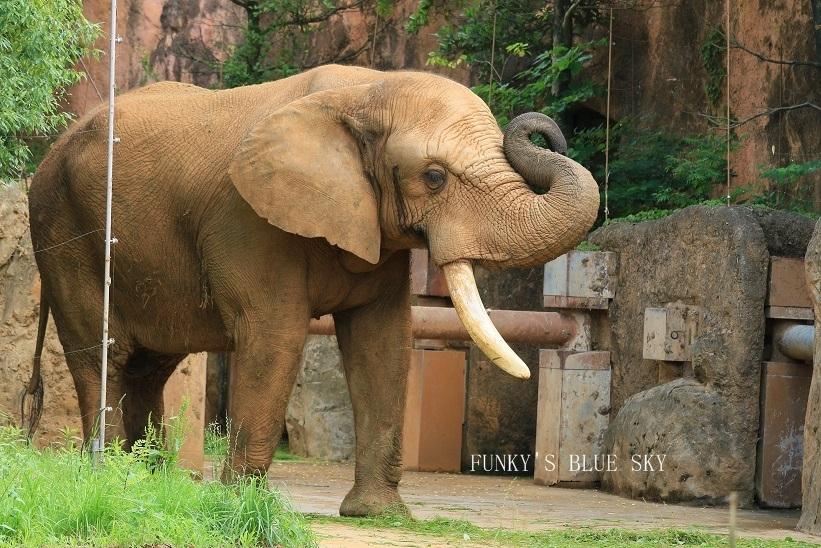 動物園に行こう♪ (暑中お見舞い申し上げます。)_c0145250_12114850.jpg