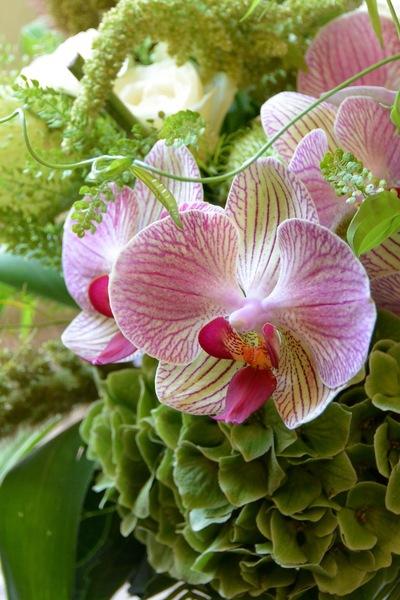 暑さに負けないお花。。。_a0229658_1854963.jpg