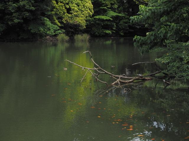 水と緑_d0251171_12301481.jpg