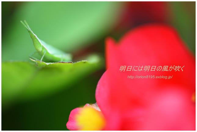 f0361079_16235735.jpg