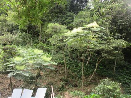 みさき里山クラブ定例活動日・・・孝子の森  by  (ナベサダ)_f0053885_2095268.jpg
