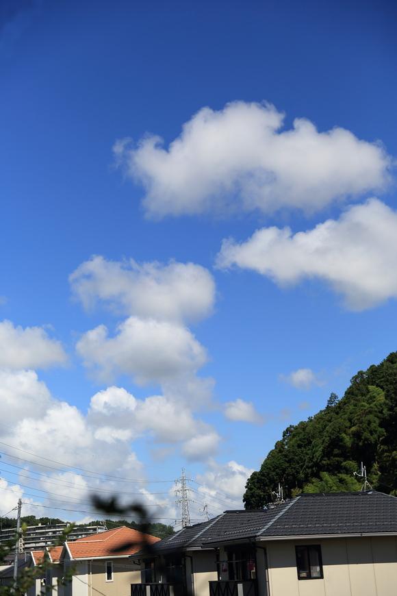 梅雨が明けていました。_b0275998_102238.jpg
