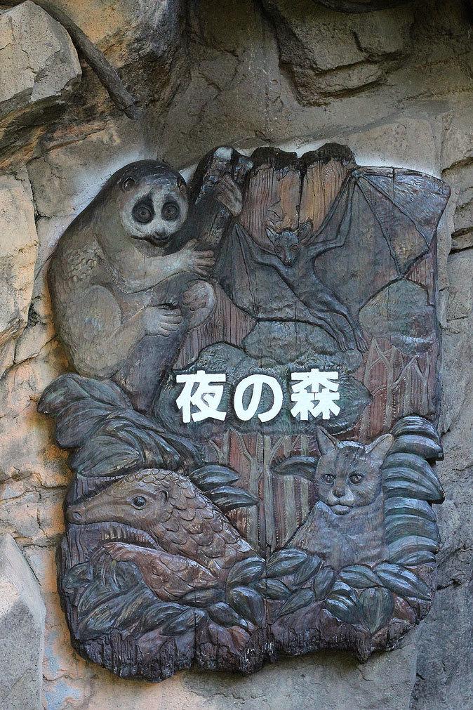 上野動物園:夜の森の動物たち_b0355317_19343104.jpg