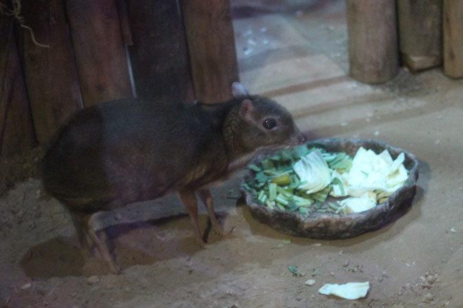 上野動物園:夜の森の動物たち_b0355317_19444964.jpg
