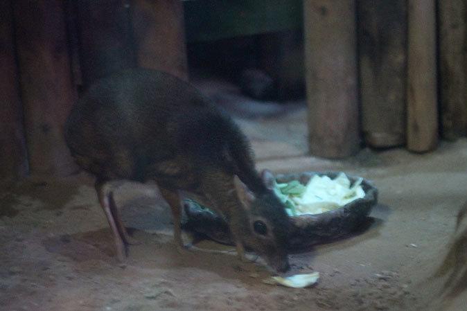 上野動物園:夜の森の動物たち_b0355317_19472282.jpg