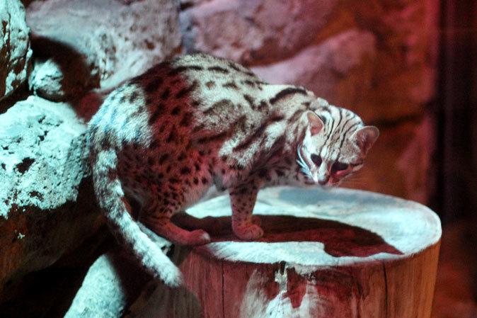 上野動物園:夜の森の動物たち_b0355317_19495113.jpg