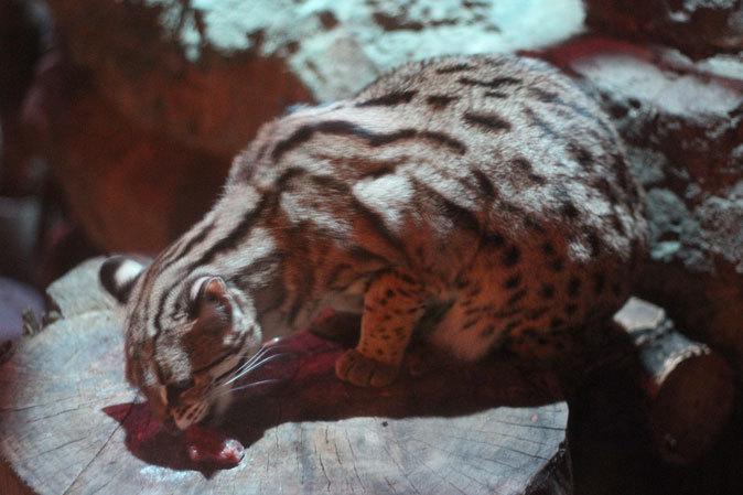上野動物園:夜の森の動物たち_b0355317_19503846.jpg