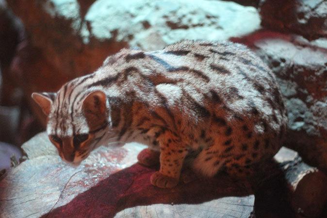上野動物園:夜の森の動物たち_b0355317_19513085.jpg