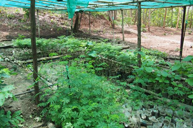南シャン州の山で象と戯れる GREEN HILL VALLEY 3_c0098222_00571541.jpg