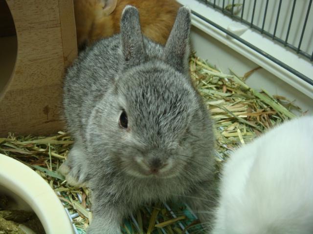 160730 ウサギ・ハリネズミ・デグー・セキセイインコ_f0189122_16312413.jpg