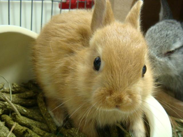 160730 ウサギ・ハリネズミ・デグー・セキセイインコ_f0189122_16313451.jpg
