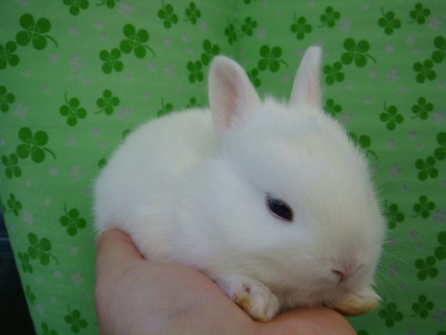 160730 ウサギ・ハリネズミ・デグー・セキセイインコ_f0189122_16315254.jpg
