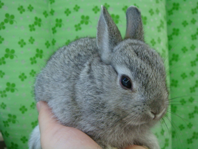 160730 ウサギ・ハリネズミ・デグー・セキセイインコ_f0189122_16321766.jpg