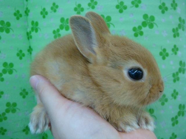 160730 ウサギ・ハリネズミ・デグー・セキセイインコ_f0189122_16322918.jpg