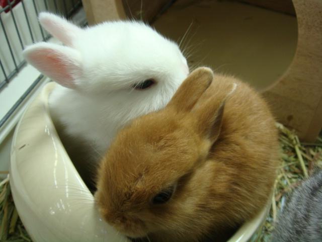 160730 ウサギ・ハリネズミ・デグー・セキセイインコ_f0189122_163243100.jpg