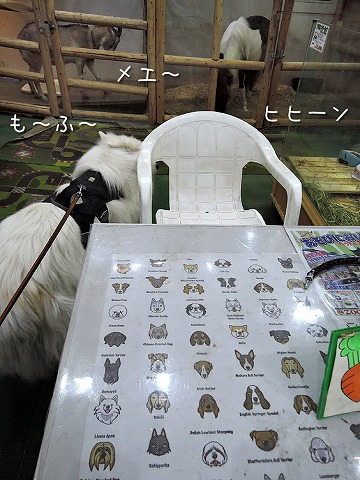 130匹ワンちゃん大行進!_c0062832_10325595.jpg