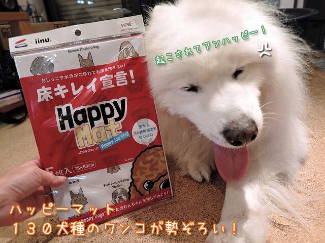 130匹ワンちゃん大行進!_c0062832_10331562.jpg