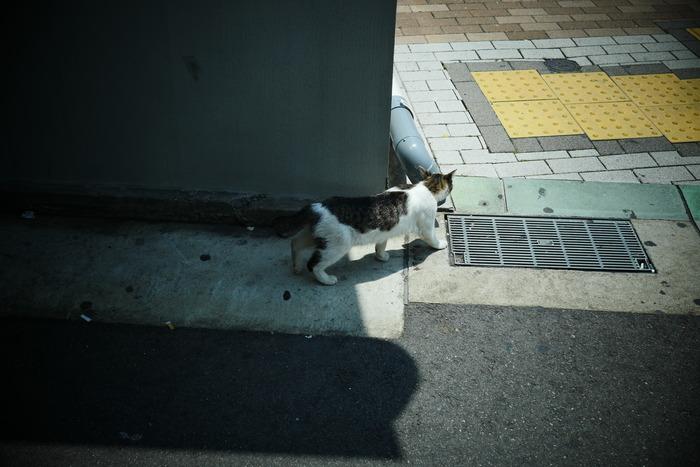 神戸 スナップ _f0021869_0335175.jpg