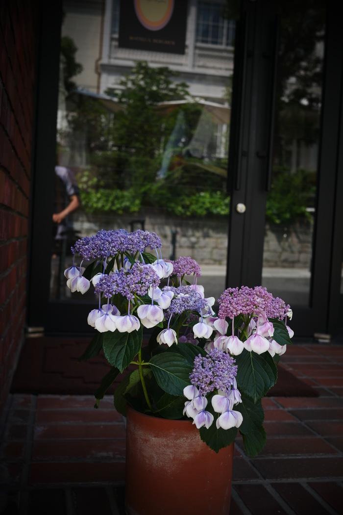 神戸 北野 スナップ _f0021869_2147294.jpg