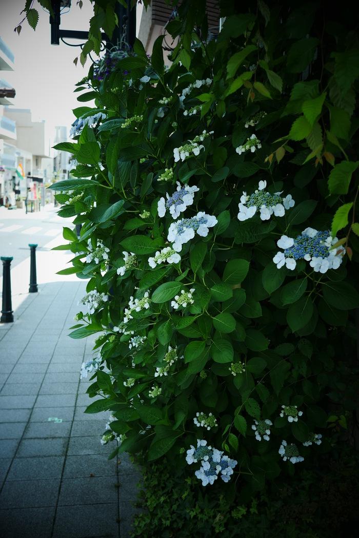 神戸 北野 スナップ _f0021869_21491515.jpg