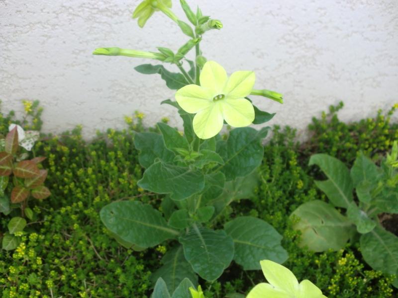 初夏らしいグリーンの花_f0361692_11250961.jpg