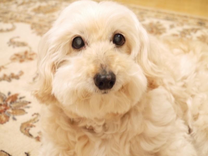 愛犬ラン☆18才になりました_f0361692_11304231.jpg
