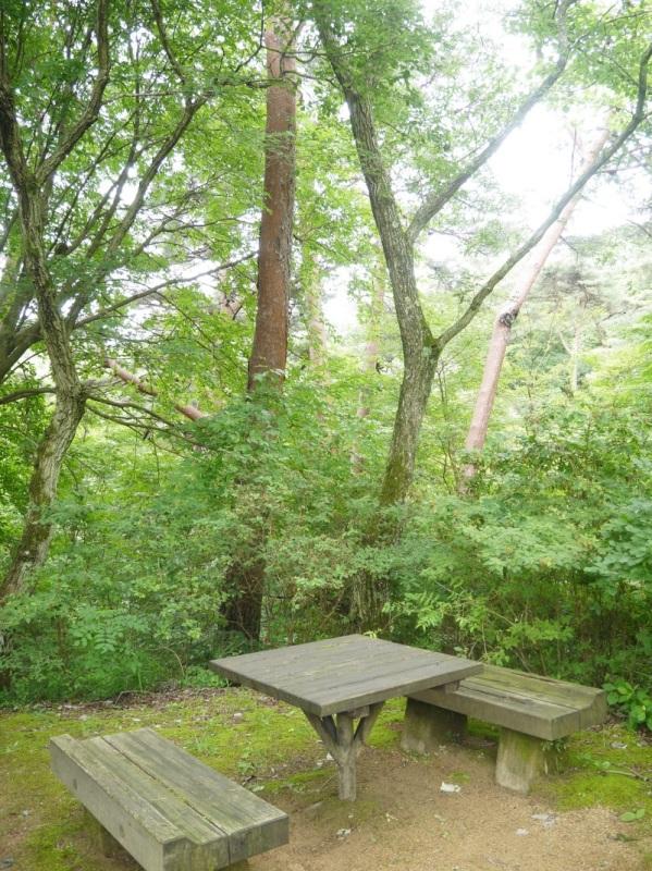 森の中で紫陽花_f0361692_11341541.jpg