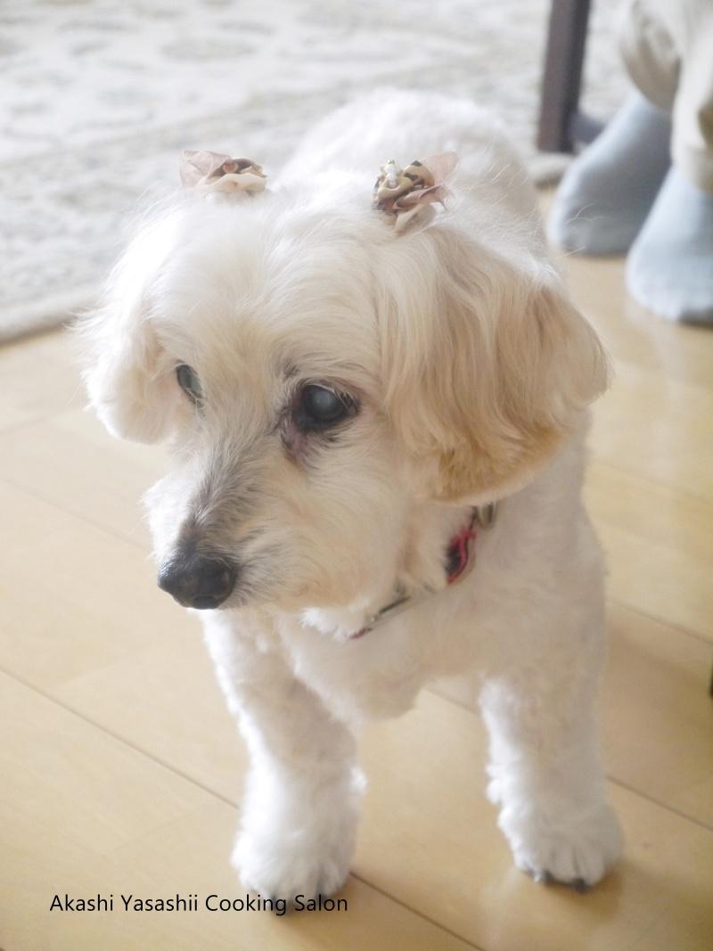 愛犬と共に料理教室_f0361692_11370015.jpg