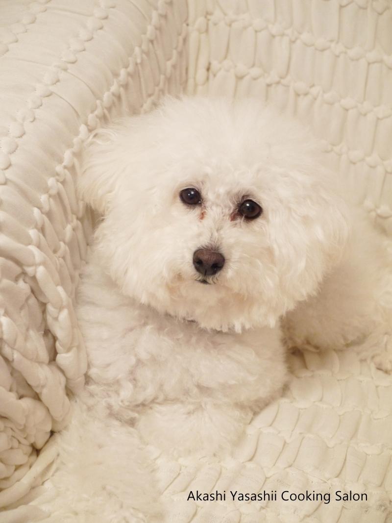 近況と愛犬♪_f0361692_11373207.jpg