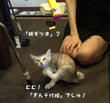 らぶちゃん「ぎん千代姫」に!_d0071596_1838257.jpg
