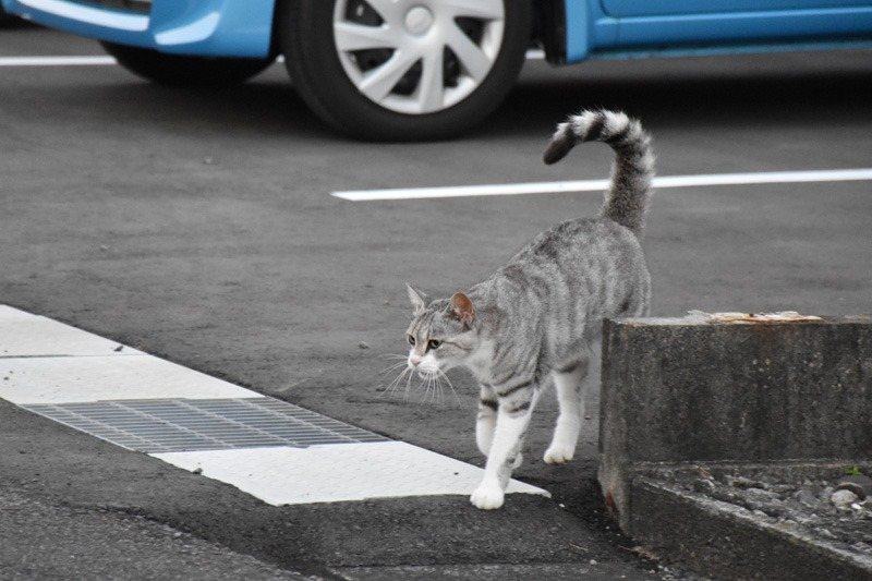 あんな猫こんな猫ぎょーっ! (≧∇≦)_c0049299_22492349.jpg