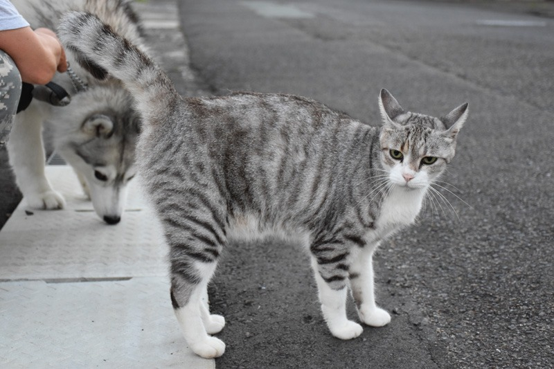 あんな猫こんな猫ぎょーっ! (≧∇≦)_c0049299_2251374.jpg