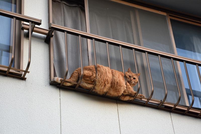 あんな猫こんな猫ぎょーっ! (≧∇≦)_c0049299_22564685.jpg