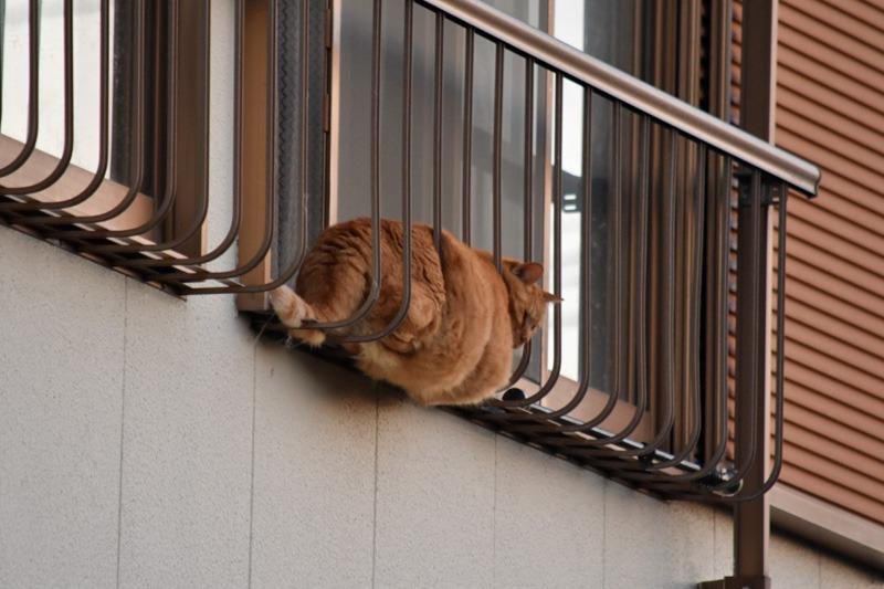 あんな猫こんな猫ぎょーっ! (≧∇≦)_c0049299_22572920.jpg