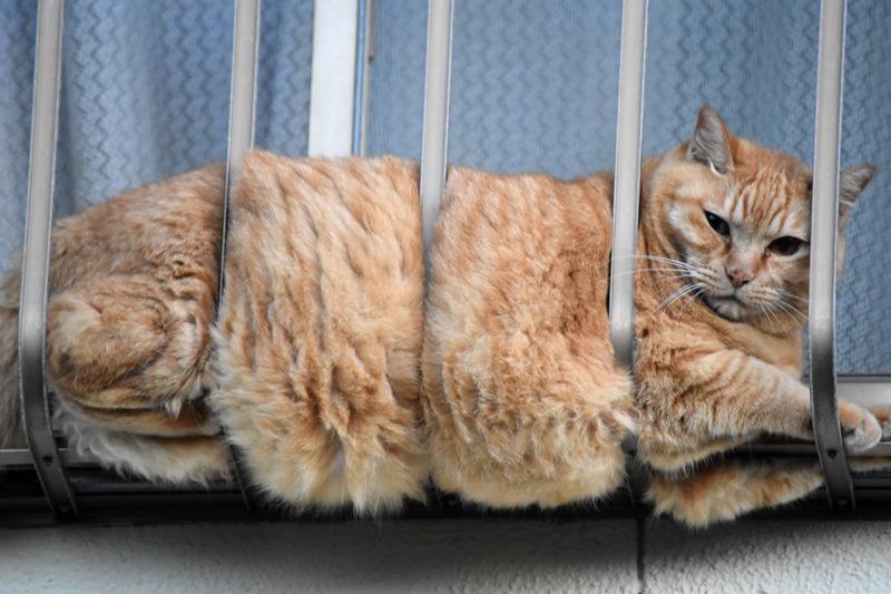 あんな猫こんな猫ぎょーっ! (≧∇≦)_c0049299_2258263.jpg