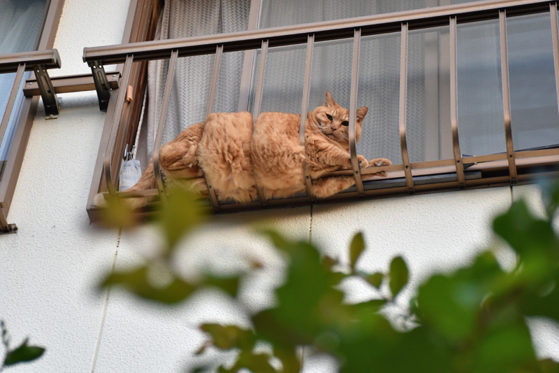 あんな猫こんな猫ぎょーっ! (≧∇≦)_c0049299_2315859.jpg