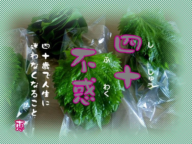 f0214467_8445280.jpg