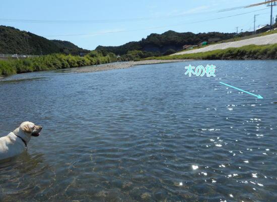 川遊び_b0145486_18592838.jpg