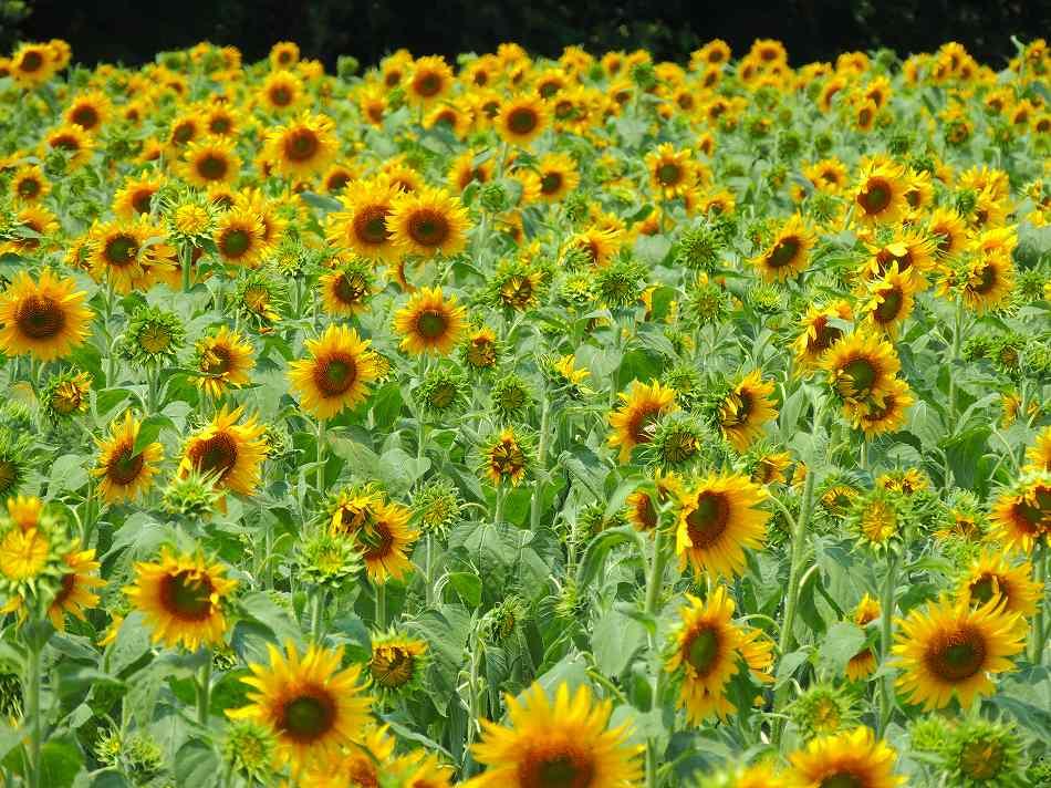 真夏に咲く!のデジブックを公開しました。_c0265095_21471757.jpg