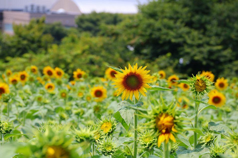 真夏に咲く!のデジブックを公開しました。_c0265095_21475389.jpg