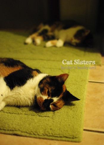 行き倒れ猫姉妹_b0253205_04174836.jpg