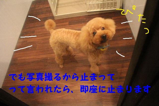 b0130018_6485350.jpg